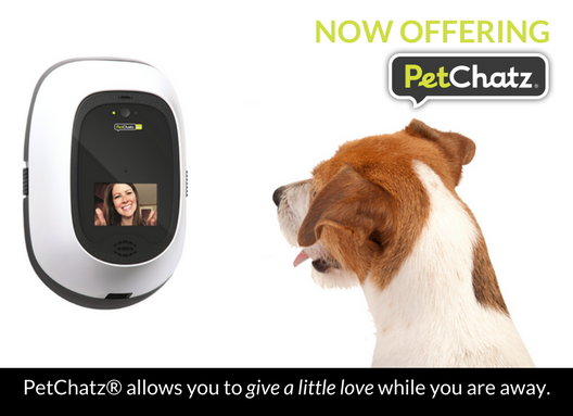 Now Offering PetChatz